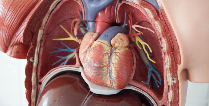 Summary Report: Fall 2020 Cardiovascular Board Meeting