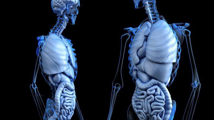 Summary Report: Fall 2020 Gastroenterology Board Meeting